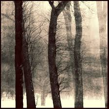 cold wind and trees