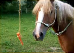 carrot before the horse